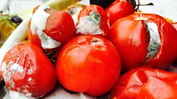 Los tomates no pueden ser consumidos después de prensentar rastros de moho (iStock)