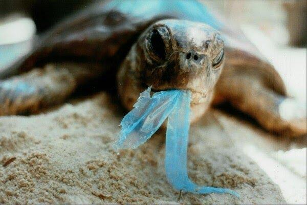 Millones de animales marítimos mueren cada año a causa de la contaminación de los océanos (Foto: Twitter)
