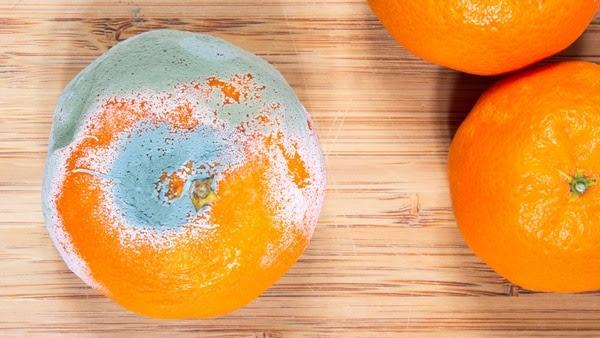 En frutas con alto contenido de agua como la naranja, el moho penetra fácilmente (iStock)