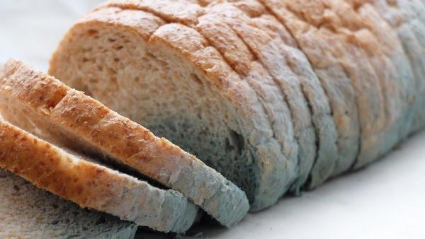 El moho más común en el pan, la especie Rhizopus stolonifer aparece con características verdeazulas o grisáceas (iStock)